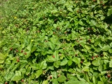 Orto-agricultura_02