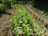 Orto-agricultura_03
