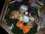 Orto-agricultura_23
