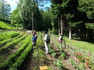 agricultura orto